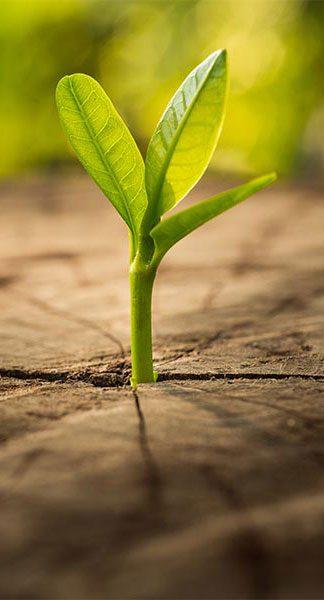 seedling-324